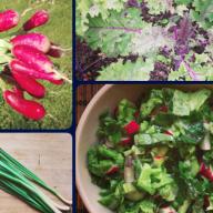 Мой рецепт весеннего салата
