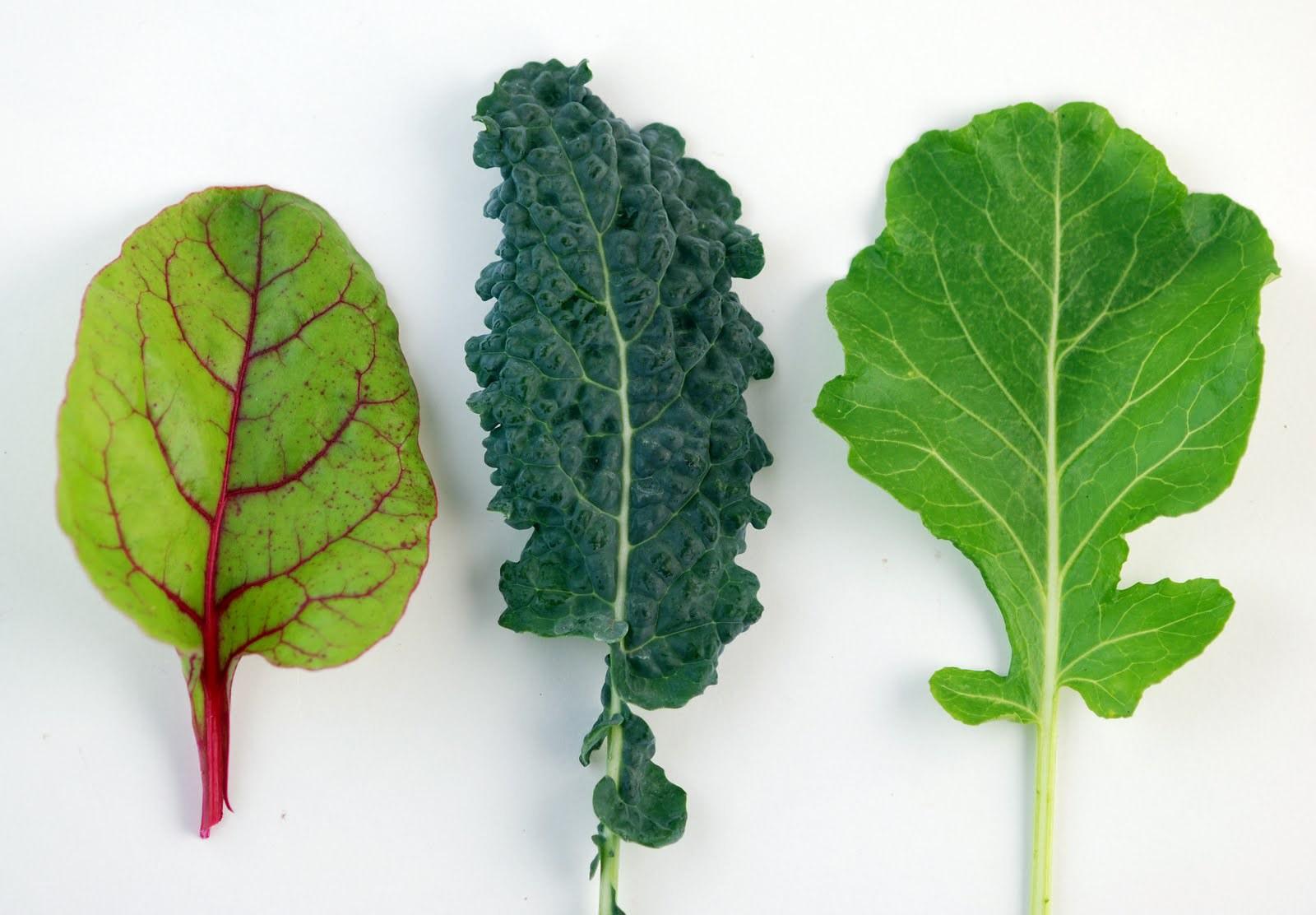 вегетарианство очищение организма