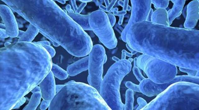 microbiome-640x353