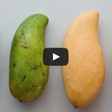 2015-04-29 15-43-10 Как порезать и почистить манго — видео   Live Up! - Google Chrome