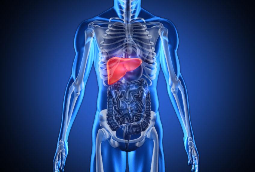 fat-saves-liver-cancer