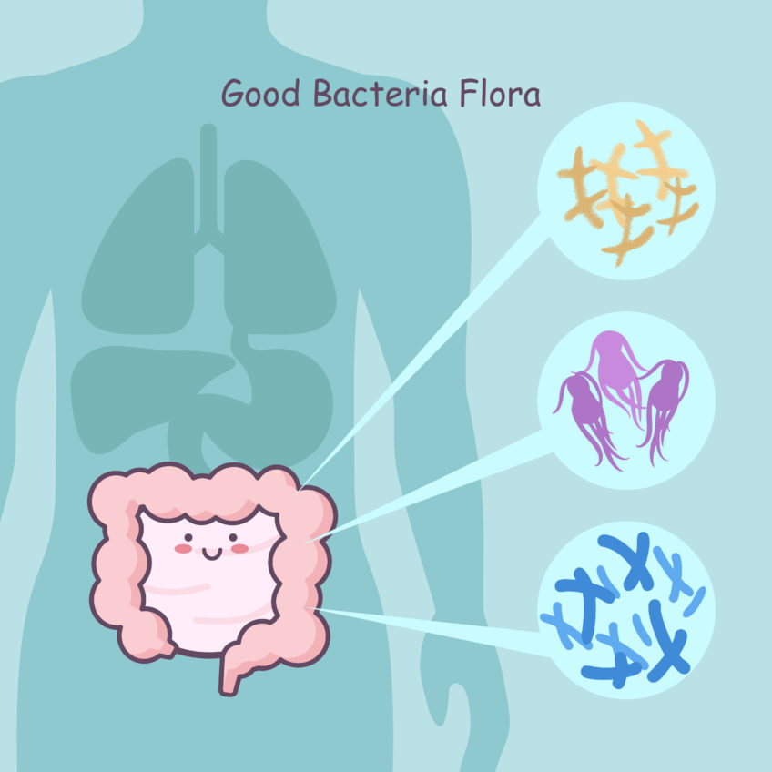 cute cartoon intestine with good bacteria flora, great for health care concept