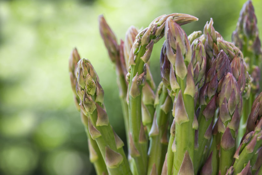 Green asparagus on blurred background