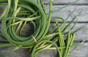 Bunches of freshly picked garlic scape are for sale at the farmers market in the spring