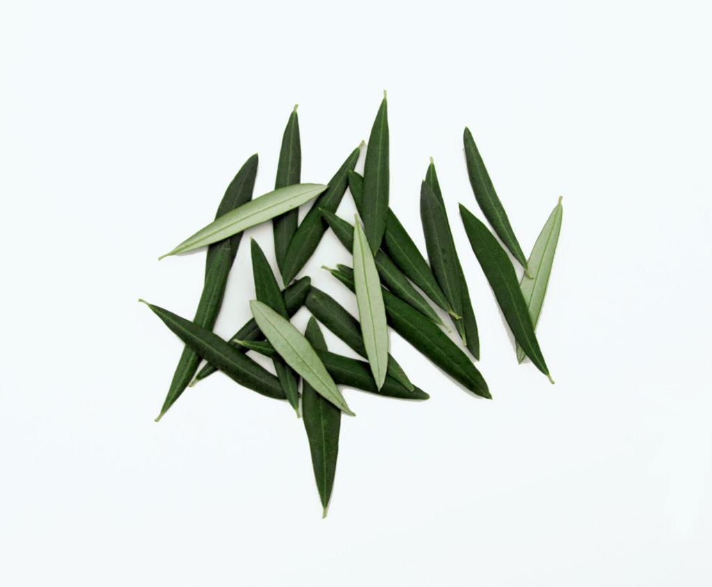 Leaves Decor